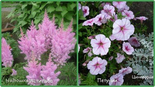Этим летом наслаждаться садом моих родителей довелось мне частично, зато мои дети налюбовались им вдоволь фото 3