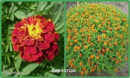 Этим летом наслаждаться садом моих родителей довелось мне частично, зато мои дети налюбовались им вдоволь фото 2