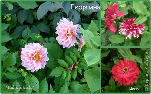 Этим летом наслаждаться садом моих родителей довелось мне частично, зато мои дети налюбовались им вдоволь фото 4