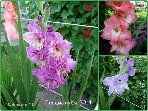 Этим летом наслаждаться садом моих родителей довелось мне частично, зато мои дети налюбовались им вдоволь фото 5