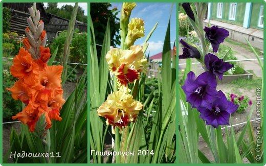 Этим летом наслаждаться садом моих родителей довелось мне частично, зато мои дети налюбовались им вдоволь фото 6
