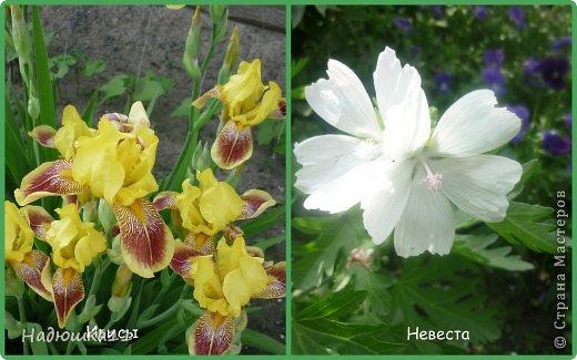 Этим летом наслаждаться садом моих родителей довелось мне частично, зато мои дети налюбовались им вдоволь фото 1