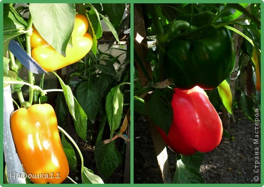Этим летом наслаждаться садом моих родителей довелось мне частично, зато мои дети налюбовались им вдоволь фото 29
