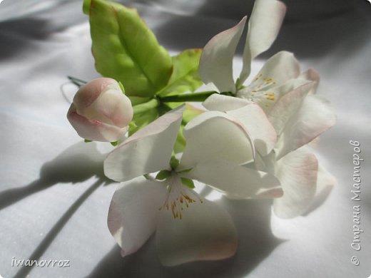 А у меня яблонька зацвела. фото 6