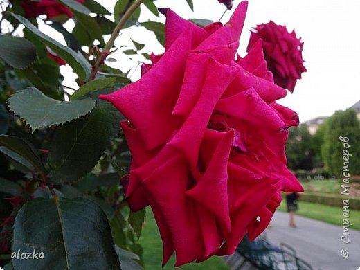 Доброго всем времени суток !!!!Вот и лето пролетело , а так хочется что бы оно у нас было чуток подлинее ........! Сегодня я к вам с цветочками и не только с ними , к цветочкам решила присоединить несколько фотографий  очаровательной Вены , которую мы посетили  этим летом , где к стати были сфотографированы и эти замечательные цветочки  , я думаю многими любимые ....  И так начнем любоваться и заряжаться положительными эмоциями !!!!!!!!!! фото 6