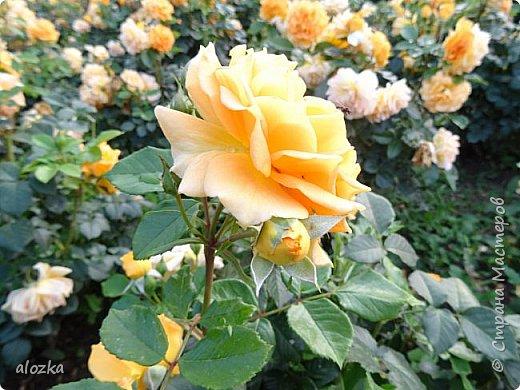 Доброго всем времени суток !!!!Вот и лето пролетело , а так хочется что бы оно у нас было чуток подлинее ........! Сегодня я к вам с цветочками и не только с ними , к цветочкам решила присоединить несколько фотографий  очаровательной Вены , которую мы посетили  этим летом , где к стати были сфотографированы и эти замечательные цветочки  , я думаю многими любимые ....  И так начнем любоваться и заряжаться положительными эмоциями !!!!!!!!!! фото 8