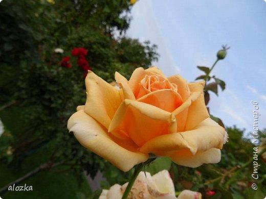 Доброго всем времени суток !!!!Вот и лето пролетело , а так хочется что бы оно у нас было чуток подлинее ........! Сегодня я к вам с цветочками и не только с ними , к цветочкам решила присоединить несколько фотографий  очаровательной Вены , которую мы посетили  этим летом , где к стати были сфотографированы и эти замечательные цветочки  , я думаю многими любимые ....  И так начнем любоваться и заряжаться положительными эмоциями !!!!!!!!!! фото 13