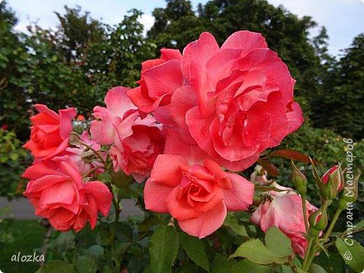 Доброго всем времени суток !!!!Вот и лето пролетело , а так хочется что бы оно у нас было чуток подлинее ........! Сегодня я к вам с цветочками и не только с ними , к цветочкам решила присоединить несколько фотографий  очаровательной Вены , которую мы посетили  этим летом , где к стати были сфотографированы и эти замечательные цветочки  , я думаю многими любимые ....  И так начнем любоваться и заряжаться положительными эмоциями !!!!!!!!!! фото 11