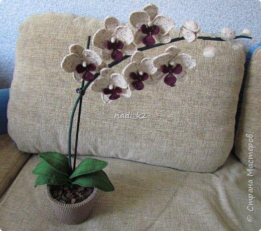 И еще орхидея фото 1