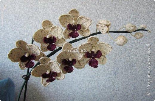 И еще орхидея фото 3