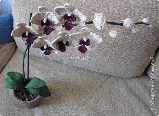 И еще орхидея фото 2