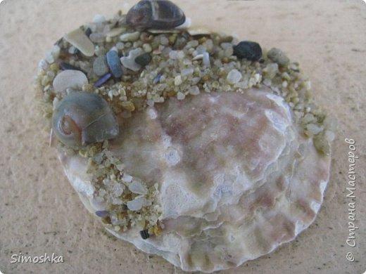 """Вот такие сувениры я сделала и привезла с Черного моря. Это магнитики. На ракушке наклеила песок и сзади магнитик. В Болгарии не знают нашего хорошего клея """"мастер"""" или """"титан"""", поэтому пришлось выкручиваться с аналогом момента... фото 3"""