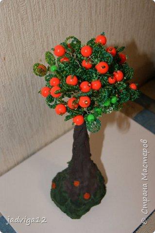 вот из таких веточек появилось красивое апельсиновое деревце фото 2