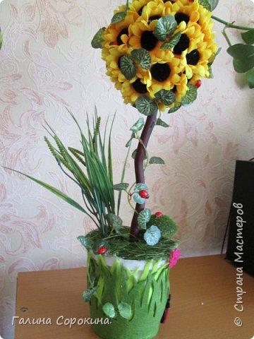 Топиарии на заказ и в наличии)))  фото 2