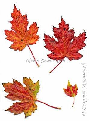 Осень — это вторая весна, когда каждый лист — цветок.  Альбер Камю.  Мой новый мастер-класс по изготовлению осенних листьев из фоамирана. фото 3