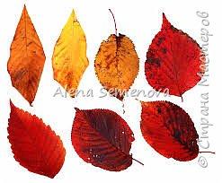 Мастер-класс Моделирование конструирование Мастер-класс осенние листья из фоамирана Фоамиран фом фото 2