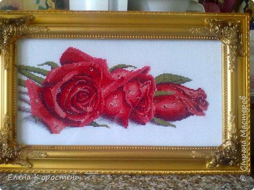 Розы в росе. фото 1
