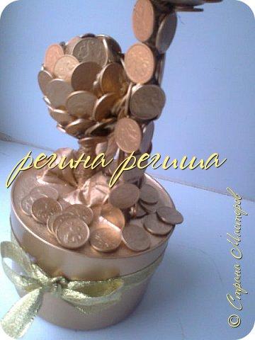 денежное деревце фото 5