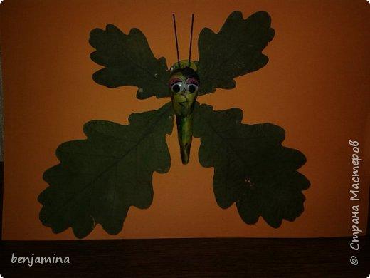 Бабочка выполнена из сухих листьев(крылья), пластилин (тельце), шпилька для волос (усики).