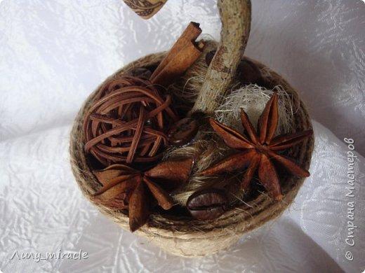 Кофеюшки, которые готовились на выставку. Классическое кофейное дерево, стволик - палочка корицы, декор горшочка - шпагат, кружево, тесьма, бадьян. фото 6