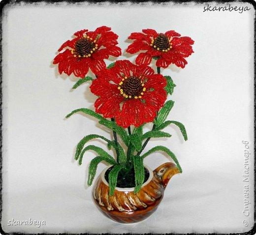 Доброго всем дня! Вот накопилось у меня немножко свежих цветов... фото 2