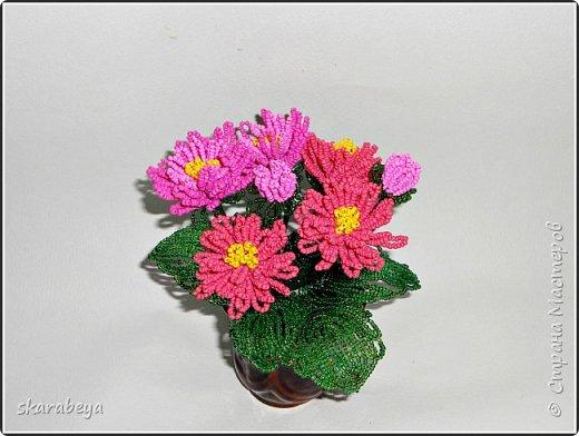 Доброго всем дня! Вот накопилось у меня немножко свежих цветов... фото 3