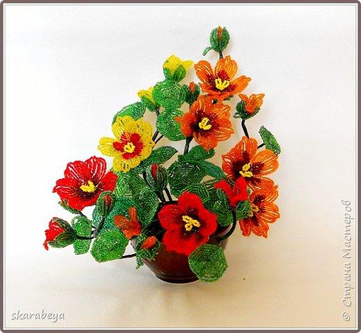 Доброго всем дня! Вот накопилось у меня немножко свежих цветов... фото 1
