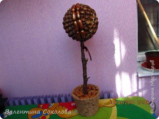 Дерево для сильных духом фото 1
