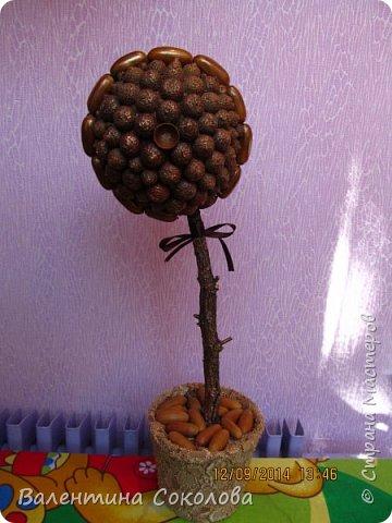 Дерево для сильных духом фото 2