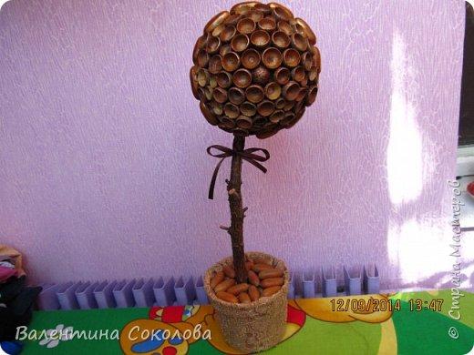 Дерево для сильных духом фото 3
