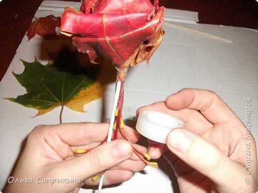 Давно слышала что делают розы из кленовых листьев,вот захотела сама попробовать,начала искать МК в инете. то что нашла не очень меня устроило,поэтому долго крутила-вертела сама....и вот что навертела.В стране Мастеров уже есть МК роз из кленовых листочков,но розы там получаются совершенно другие.Может кому нибудь пригодятся мои наработки. именно такого вида розы(пышные) получаются из листьев мелкого и среднего размера. Из очень крупных листочков почему то не получается именно такой вид. фото 19