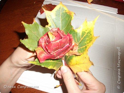 Давно слышала что делают розы из кленовых листьев,вот захотела сама попробовать,начала искать МК в инете. то что нашла не очень меня устроило,поэтому долго крутила-вертела сама....и вот что навертела.В стране Мастеров уже есть МК роз из кленовых листочков,но розы там получаются совершенно другие.Может кому нибудь пригодятся мои наработки. именно такого вида розы(пышные) получаются из листьев мелкого и среднего размера. Из очень крупных листочков почему то не получается именно такой вид. фото 20