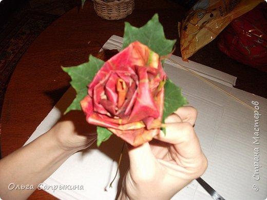 Давно слышала что делают розы из кленовых листьев,вот захотела сама попробовать,начала искать МК в инете. то что нашла не очень меня устроило,поэтому долго крутила-вертела сама....и вот что навертела.В стране Мастеров уже есть МК роз из кленовых листочков,но розы там получаются совершенно другие.Может кому нибудь пригодятся мои наработки. именно такого вида розы(пышные) получаются из листьев мелкого и среднего размера. Из очень крупных листочков почему то не получается именно такой вид. фото 22
