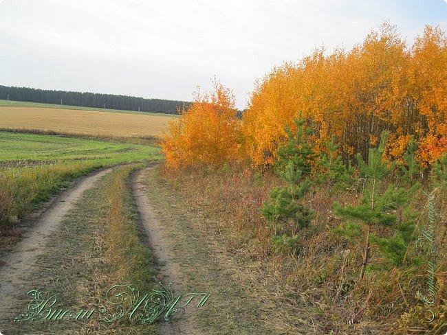 Добрый вечер!(а у кого - то день :D )Сегодня был довольно хороший денек, и мы ездили в осенний лес!Как же там красиво))))Я взяла с собой Марту, как раз сшились штанцы и топ! Шишечку нашла :) их там очееньь много :) фото 11