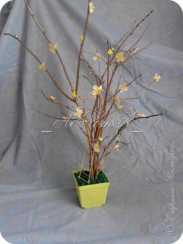 Деревце фото-коллаж фото 1