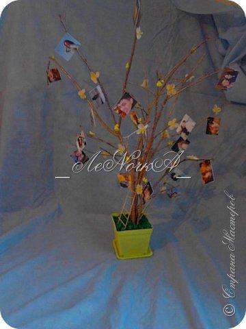Деревце фото-коллаж фото 2