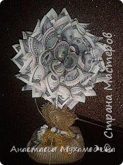 немного денежных деревцев фото 3