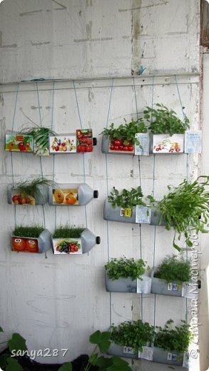 Зелень на балконе фото. - балконы - каталог статей - утеплен.