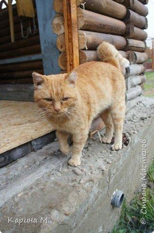 Продолжаю репортаж отпуска в деревне.  фото 56