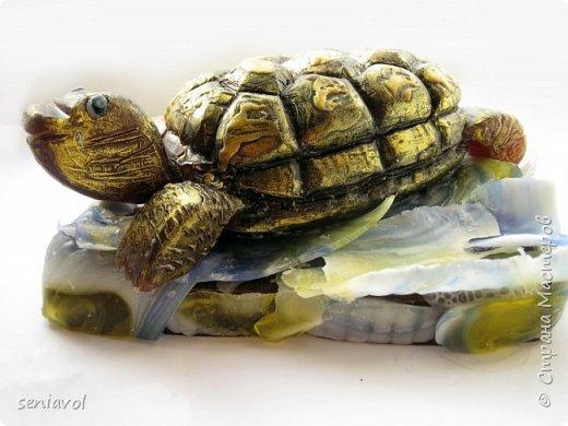 Поступил заказ, для одной Итальянской синьоры увлекающейся разного рода черепашками, куклами и тарелками. Сама особа почтенного возраста и довольно творческий человек судя по описаниям моего клиента.  Поэтому было решено создать мыльный подарок в виде черепахи. фото 1