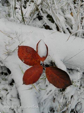 Открываю сезон с фоторепортажа.В воскресенье с подругой были в лесу.Там так красиво.Осень встретилась с Зимой на нейтральной территории.Результат этой встречи я и запечетлила на фотик.  фото 2