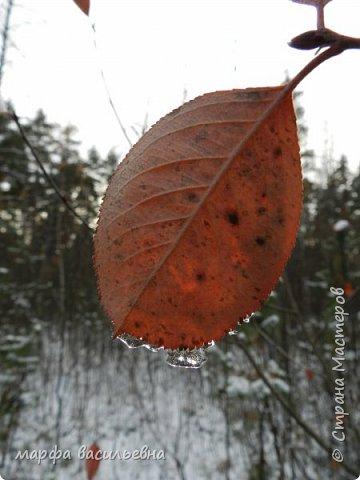 Открываю сезон с фоторепортажа.В воскресенье с подругой были в лесу.Там так красиво.Осень встретилась с Зимой на нейтральной территории.Результат этой встречи я и запечетлила на фотик.  фото 4