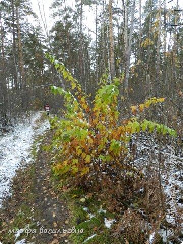 Открываю сезон с фоторепортажа.В воскресенье с подругой были в лесу.Там так красиво.Осень встретилась с Зимой на нейтральной территории.Результат этой встречи я и запечетлила на фотик.  фото 5