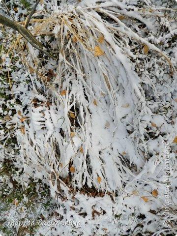 Открываю сезон с фоторепортажа.В воскресенье с подругой были в лесу.Там так красиво.Осень встретилась с Зимой на нейтральной территории.Результат этой встречи я и запечетлила на фотик.  фото 8