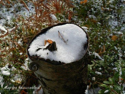 Открываю сезон с фоторепортажа.В воскресенье с подругой были в лесу.Там так красиво.Осень встретилась с Зимой на нейтральной территории.Результат этой встречи я и запечетлила на фотик.  фото 14