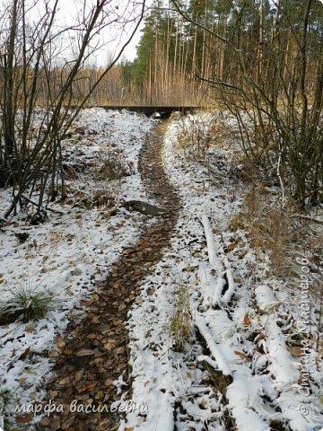 Открываю сезон с фоторепортажа.В воскресенье с подругой были в лесу.Там так красиво.Осень встретилась с Зимой на нейтральной территории.Результат этой встречи я и запечетлила на фотик.  фото 13