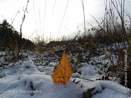 Открываю сезон с фоторепортажа.В воскресенье с подругой были в лесу.Там так красиво.Осень встретилась с Зимой на нейтральной территории.Результат этой встречи я и запечетлила на фотик.  фото 15