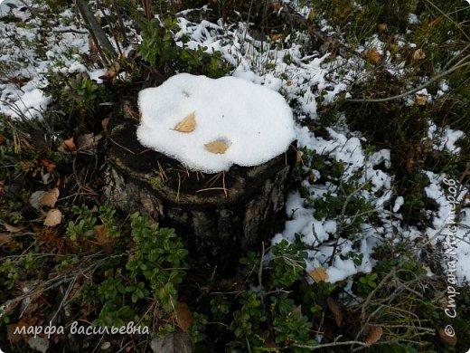 Открываю сезон с фоторепортажа.В воскресенье с подругой были в лесу.Там так красиво.Осень встретилась с Зимой на нейтральной территории.Результат этой встречи я и запечетлила на фотик.  фото 16