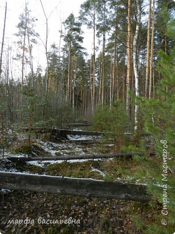 Открываю сезон с фоторепортажа.В воскресенье с подругой были в лесу.Там так красиво.Осень встретилась с Зимой на нейтральной территории.Результат этой встречи я и запечетлила на фотик.  фото 18
