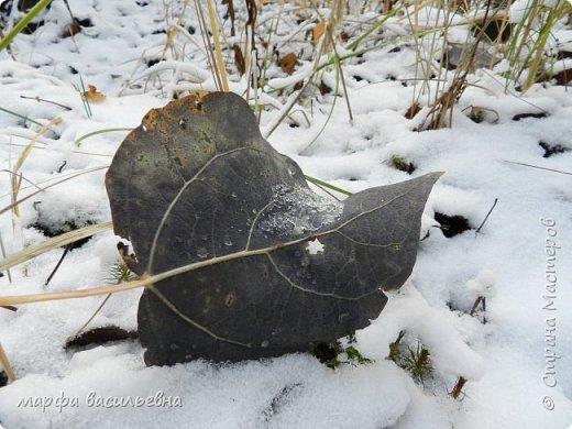 Открываю сезон с фоторепортажа.В воскресенье с подругой были в лесу.Там так красиво.Осень встретилась с Зимой на нейтральной территории.Результат этой встречи я и запечетлила на фотик.  фото 17